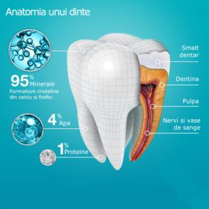 Cat de rezistenti sunt dinții? Anatomia unui dinte