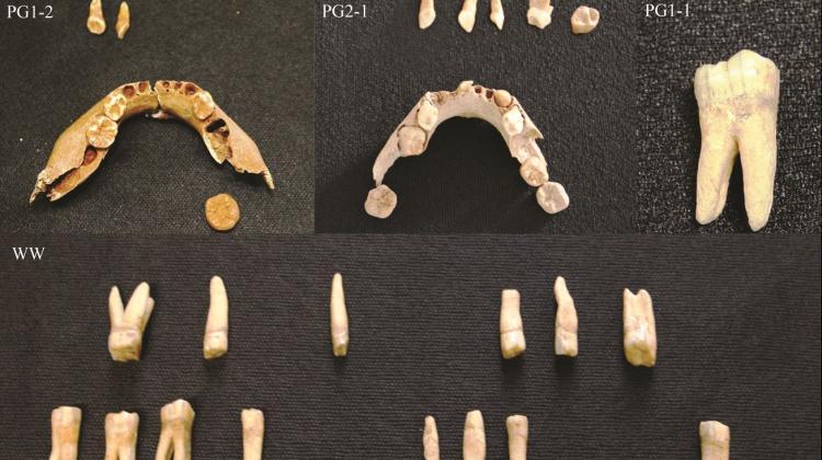 Ramasite din Mezolitic descoperite in Polonia, credit: J. Tomczyk